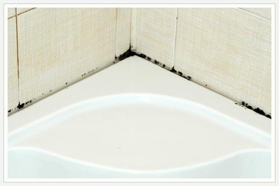 Черная плесень в ванной
